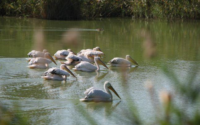 Lacul Oltina – paradisul păsărilor