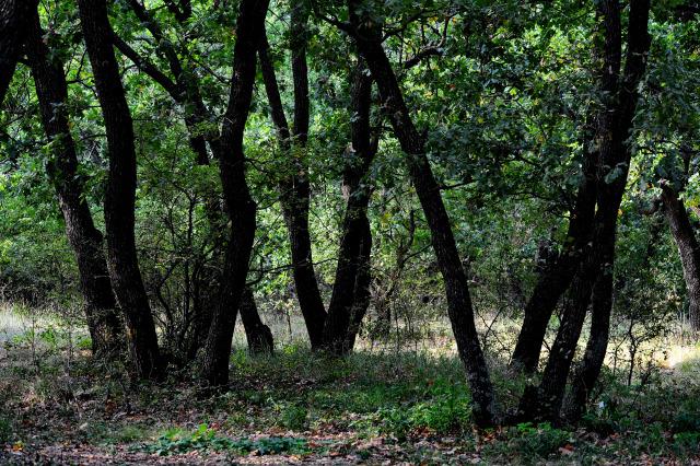 Legenda din Pădurea Morţii