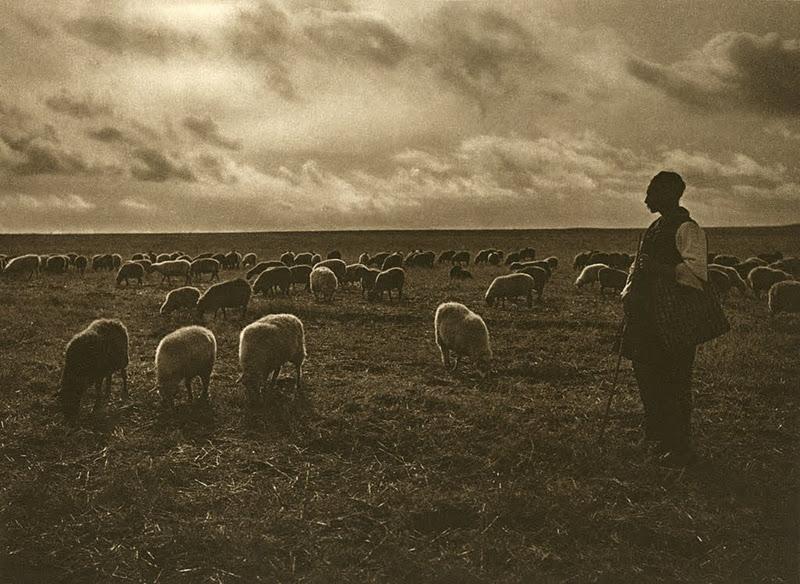 Miorița dobrogeană – Dunărea, Marea și Blestemul Mamei de cioban