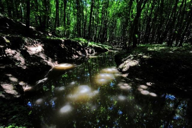 Pădurile de altădată ale Dobrogei