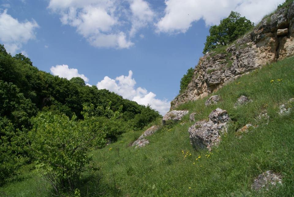 Năluca din Pădurea Mireselor – povestea Frumoasei Furnica, o legendă din Canarale