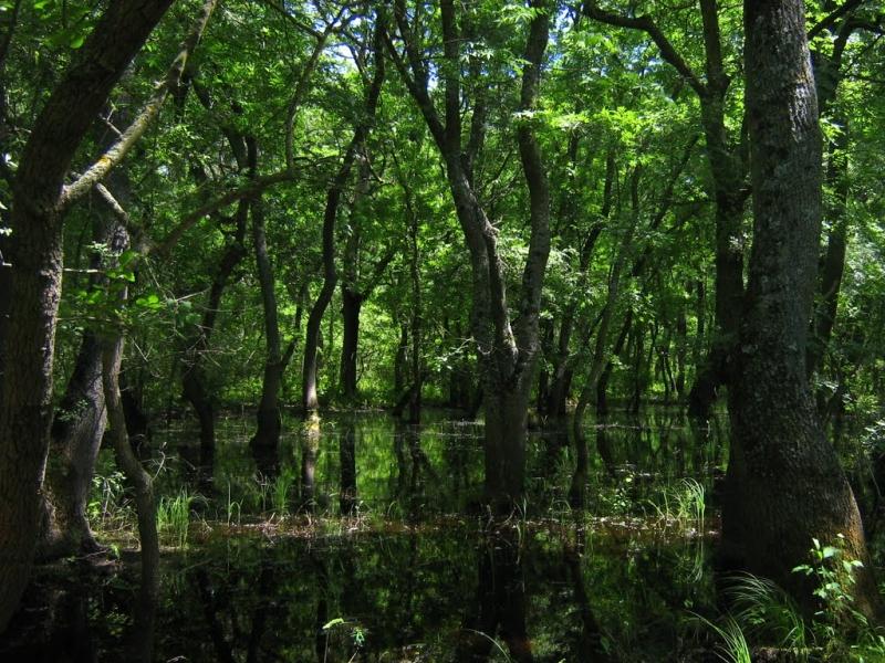 Poveşti din Pădurea Letea