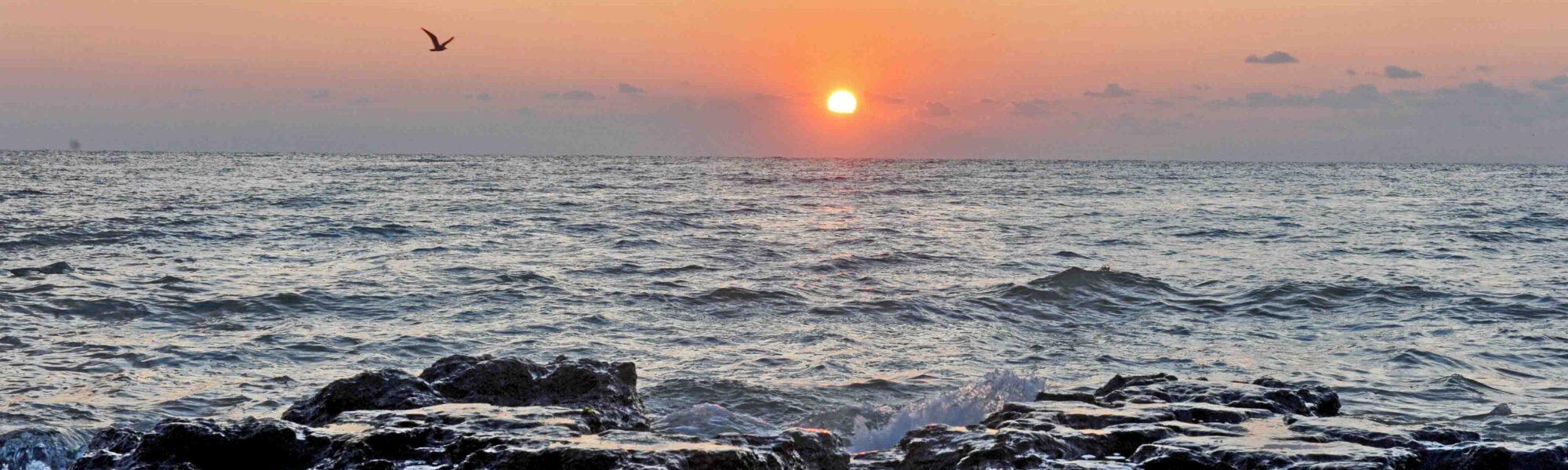 """Axaina, Marea """"Indigo"""" a sciţilor"""