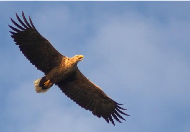 Kartal şi legendele satului Vulturu