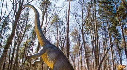 Diplodocus, cel mai înalt dinozaur din istorie, expus la Dino Parc Râșnov